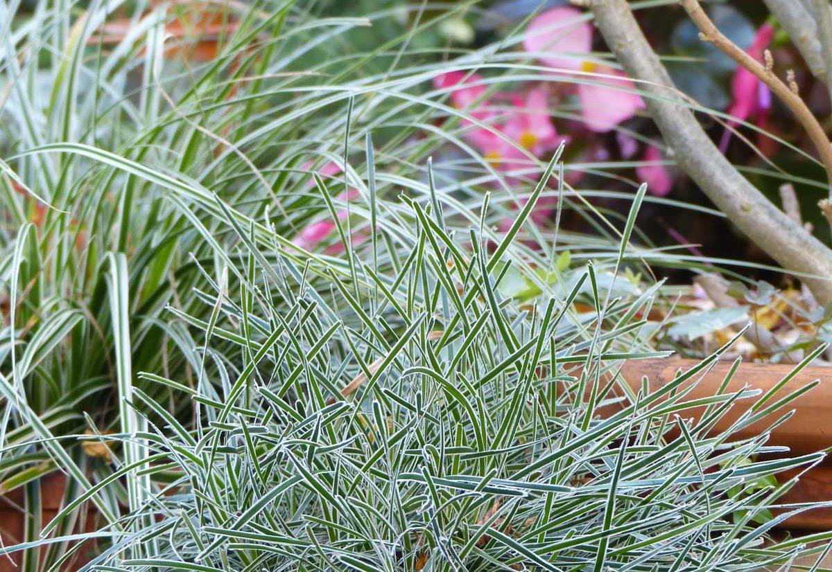 Magasin de plantes à Angers 49