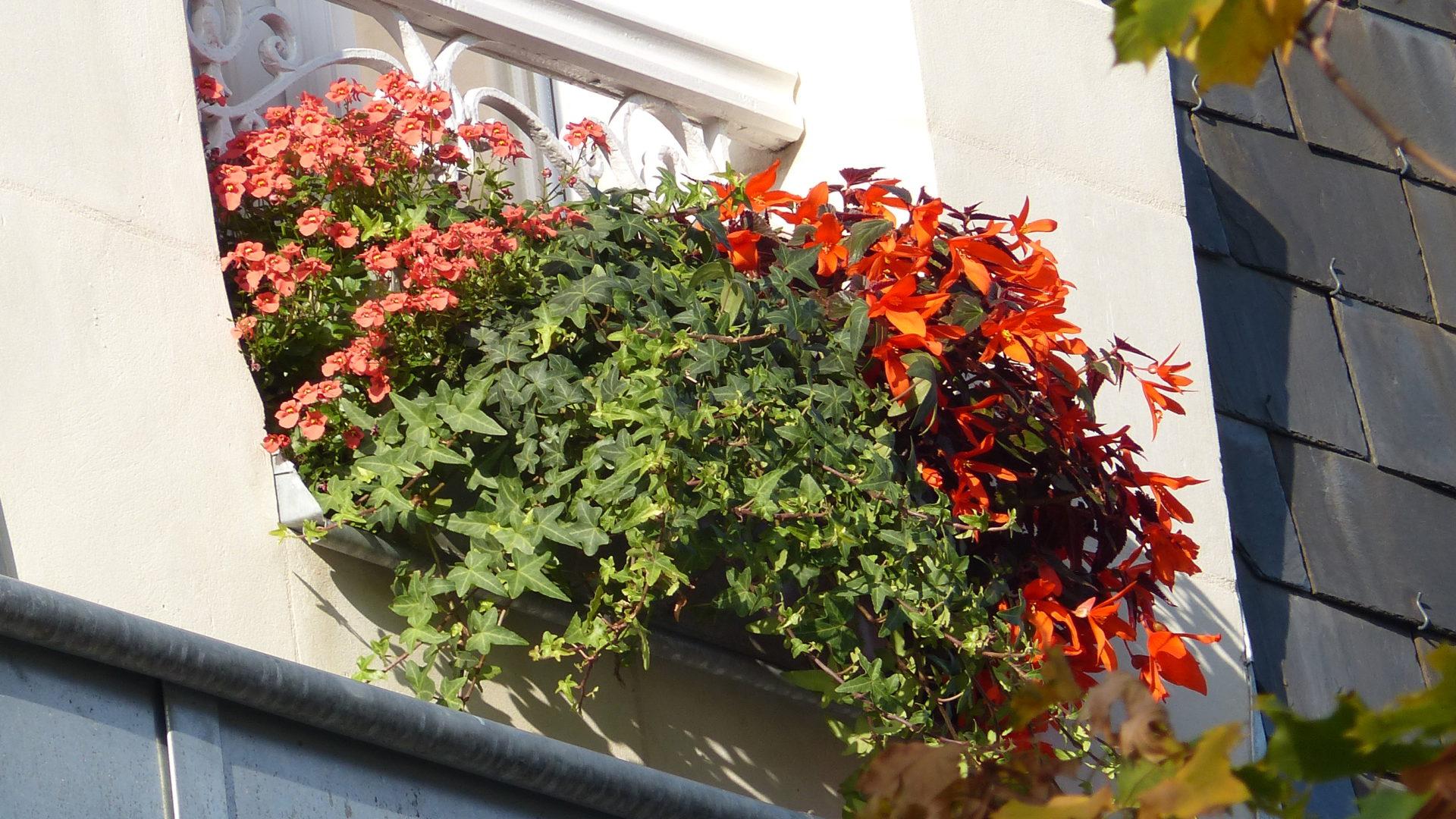 Jardinière estivale sur un rebord de fenêtre par Hortelli