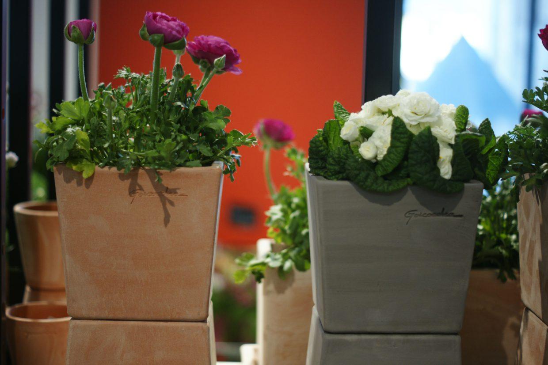 De délicates fleurs printanières dans des pots en terre cuite