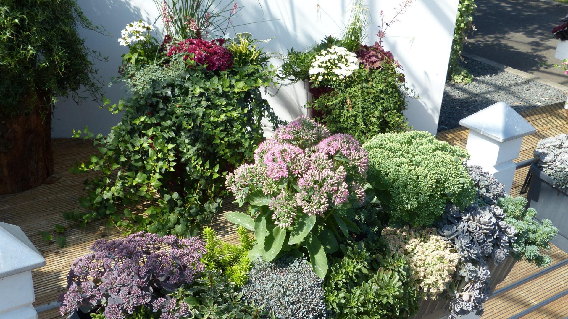 Optez pour des jardinières 100% sedum