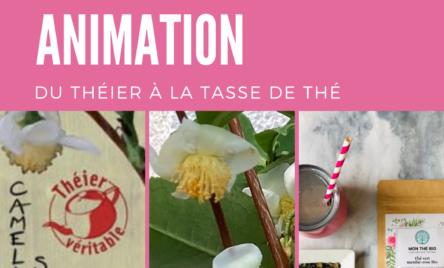 animation : théier de l'arbuste à la tasse